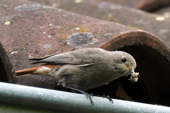 Quelques photos d'oiseaux